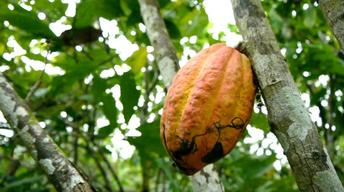12507 Cote d'Ivoire Education Cocoa Farming